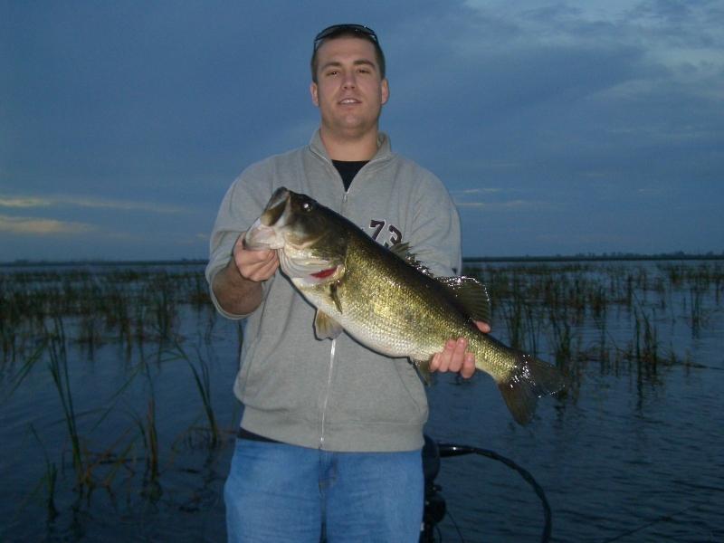 Lake okeechobee wildlife pictures sightseeing for Lake okeechobee bass fishing