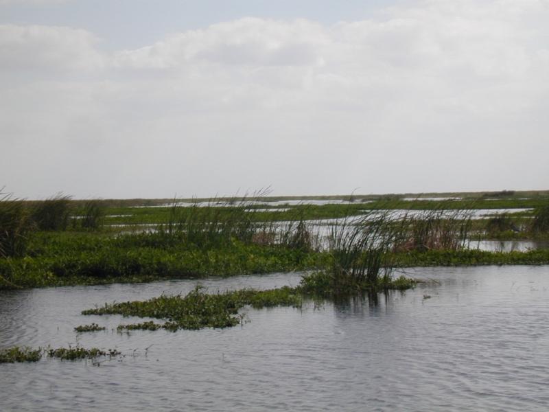 Pahokee restaurants and fast food in palm beach county for Lake okeechobee bass fishing